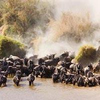 4 Days Maasai Mara-Lake Nakuru Tour