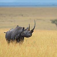 5 Days Maasai Mara-Lake Naivasha-Lake Nakuru Tour