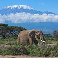 6 Days Maasai Mara - Lake Nakuru - Amboseli National Park Tour