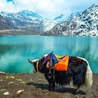 Sikkim Pacakge(7D & 6N)