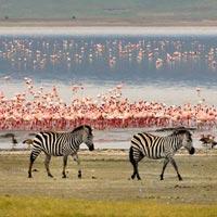 7days Tanzania Wildlife Safari tour, Tarangire to Lake Manyara