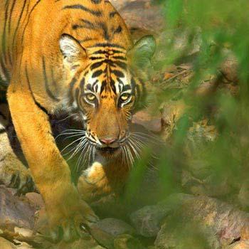 India Wildlife Tour