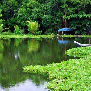 Backwaters of Kerala Tour