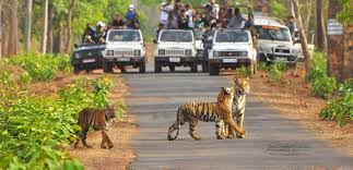 Delhi Corbett Weekend Tour Package
