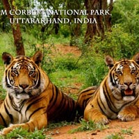 Corbett National Park- Wildlife Tour