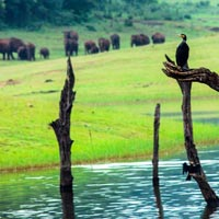 Thekkady Wildlife Tour