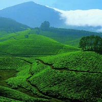 Munnar Pleasure - Honeymoon Special Tour