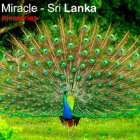 The Small Miracle - Sri Lanka Tour