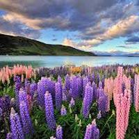 New Zealand South Island Tour