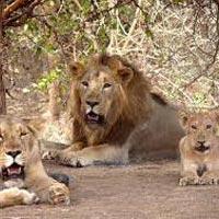 Short Escape to Gir National Park Tour
