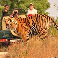 Anandvan - Hemalkasa - Tadoba - Nagpur Tour
