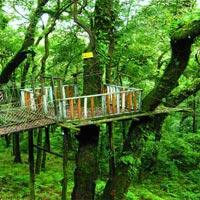 Green Dooars (Jaldapara 1N - Lataguri 2N) Tour