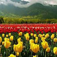 4 Days Trip to Kashmir