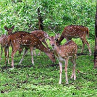 South India Spices & Sandalwood Tour