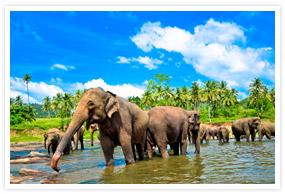 Splendours of Srilanka Tour