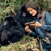 4Days/3Nights Rwanda Mountain Gorillas Tracking Itinerary Tour