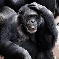 One Day Gorillas Tracking Tour