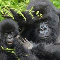 The 3Days Discover Rwanda Tour