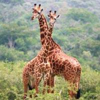 6 Days Gorilla Tracking - Akagera National Park game Drive Tour