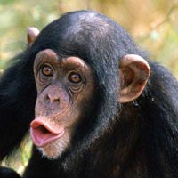 Rwanda Tour / 8 days Safaris(Gorillas and Chimpanzees)