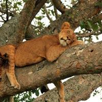 3 Days Akagera National Park