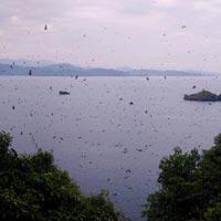 5 Days Rwanda Gorilla & Lake Kivu