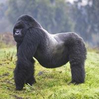 3-Day Rwanda Gorilla Direct- Mid-Range Trip Package
