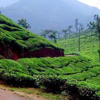 Hill Stations of South India Package