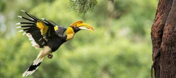 North India Bird Watching Tour Package