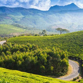 Best of South India Hill Stations Tour