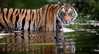 Photographic Safari India Package