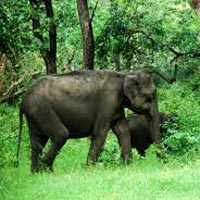 South india Tour Package 6D