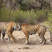 Short Escape to Sariska Tour