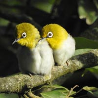 Pangot Birding 2nights/3days Tour