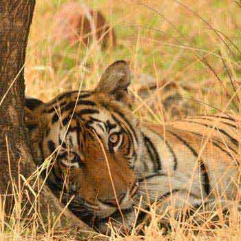 Short Escape to Ranthambore Package