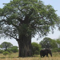 Big Five And Migration Safaris Tour