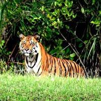 man v/s wild at Sundarbans Tour