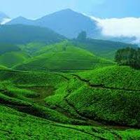 Munnar - Thekkady - Alleppey - Kovalam - Trivandrum Tour