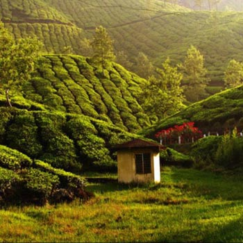 Kerala Prime Attractions in 5 Days Tour