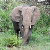 Beauty Of Northern Safari 6Days Tour