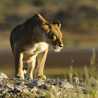 Wildlife And Holistic Therapies Tour