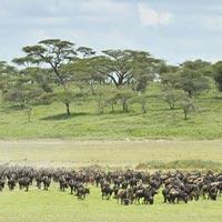 Africa magical safaris Tour