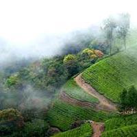 Kerala 5Nights / 6Days Tour