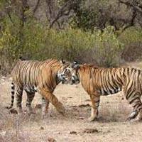 Delhi - Sariska Wildlife Tour