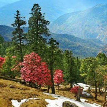 Blissful Nainital Ranikhet Tour Package From Delhi
