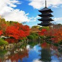 Japan Cherry Blossom Package