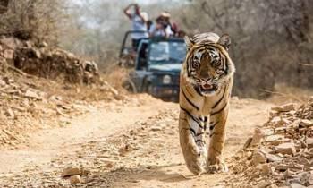 Safari Corbett Tour