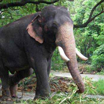 Guruvayoor - Mallampuzha - Cochin - Munnar - Thekkady - Alleppy Trip 14 Night 15 Days Tour