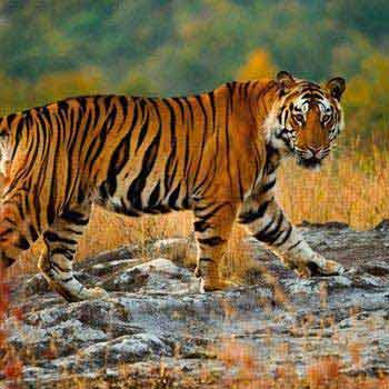 North & Central India Wildlife Tour