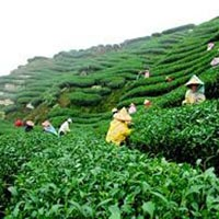 Winter Special Tour to Darjeeling